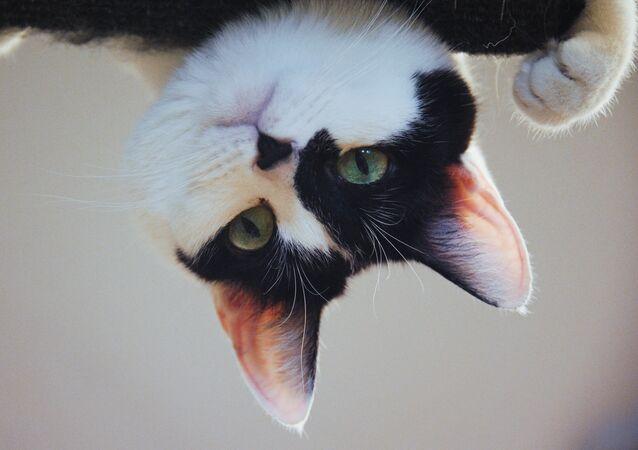 Uno de los animales del Teatro de los Gatos de Kuklachov