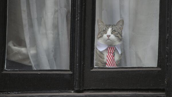 El gato de Julian Assange - Sputnik Mundo