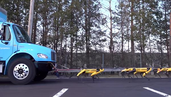 Los perros robot de Boston Dynamics ya saben remolcar un camión - Sputnik Mundo
