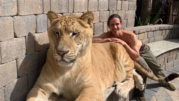 Kody Antle, conocido domador de grandes felinos, y su ligre Hércules - Sputnik Mundo