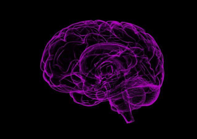 Cerebro (imagen referencial)