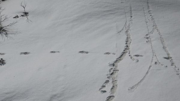 Huellas encontradas en el Himalaya - Sputnik Mundo