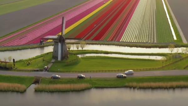 Campos de tulipanes en Holanda - Sputnik Mundo