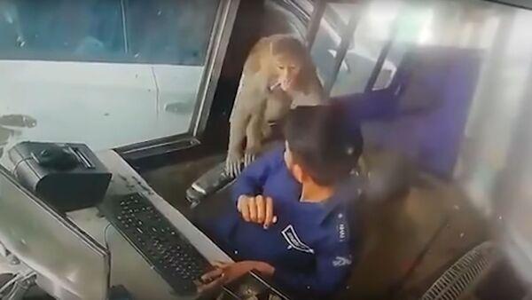 Mono ladrón en la India - Sputnik Mundo