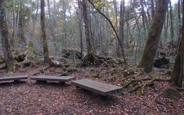 El bosque de Aokigahara  - Sputnik Mundo
