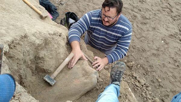 Hallazgo de fémur de perezoso terrestre gigante en Mar del Plata - Sputnik Mundo