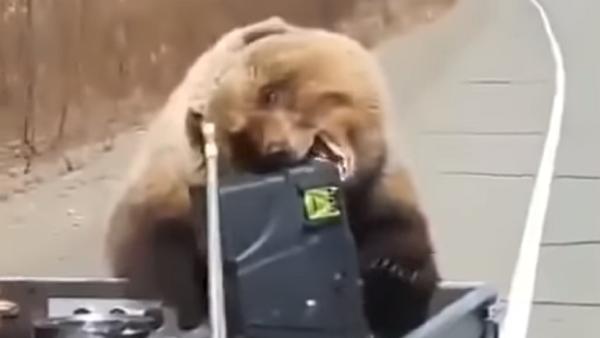 Solo en Rusia: un oso les roba una nevera a unos cazadores - Sputnik Mundo