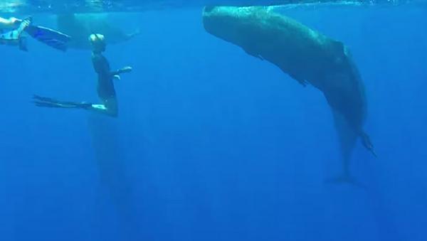 Diferentes pero iguales: una buceadora nada junto a una ballena gigante - Sputnik Mundo