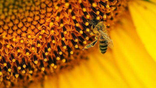 Una abeja - Sputnik Mundo
