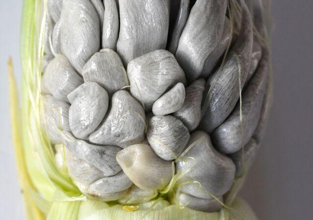 Una mazorca afectada por el huitlacoche