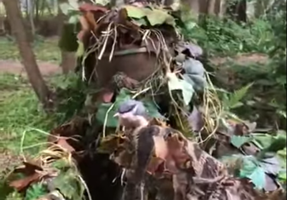 Un camuflaje que engañó a dos pajaritos (vídeo)