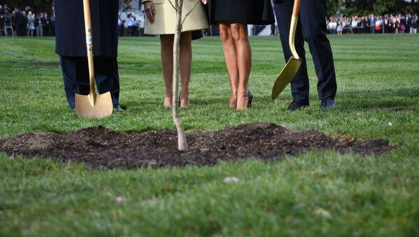 El árbol que el presidente de EEUU, Donald Trump, y el presidente de Francia, Emmanuel Macron, plantaron en el jardín de la Casa Blanca - Sputnik Mundo