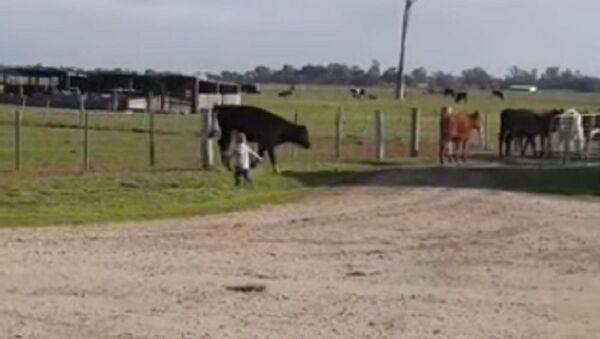 Un pequeño vaquero innato muestra a las vacas quién es el dueño en la granja - Sputnik Mundo