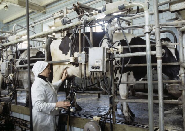 Fabricación de leche en un pueblo ruso