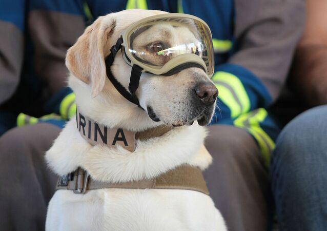 Frida, perro rescatista de México
