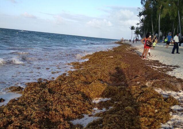 Sargazo en las playas del Caribe
