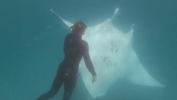 El emocionante momento en el que una mantarraya gigante pide ayuda a unos buzos - Sputnik Mundo