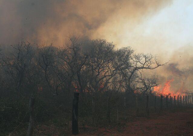 Incendios forestales en la Amazonía