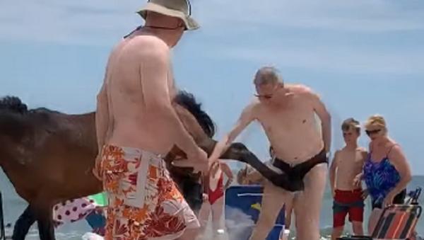 ¡No me toques!: un caballo patea a un turista maleducado   - Sputnik Mundo