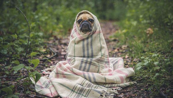 Un perrito, foto de archivo - Sputnik Mundo