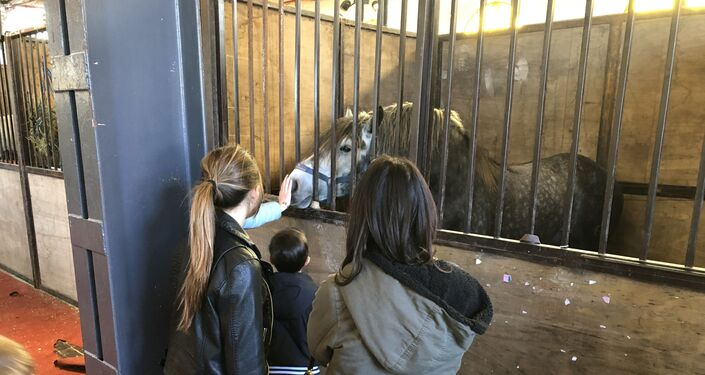 Visitantes acarician un caballo en la Exposición Rural de Buenos Aires