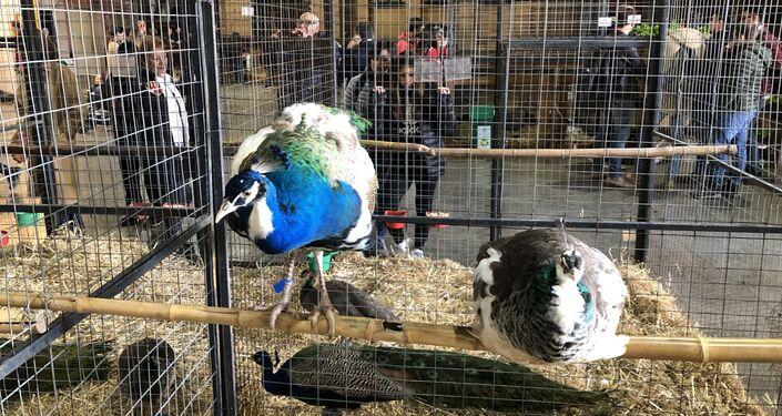 Aves en la Exposición Rural de Buenos Aires