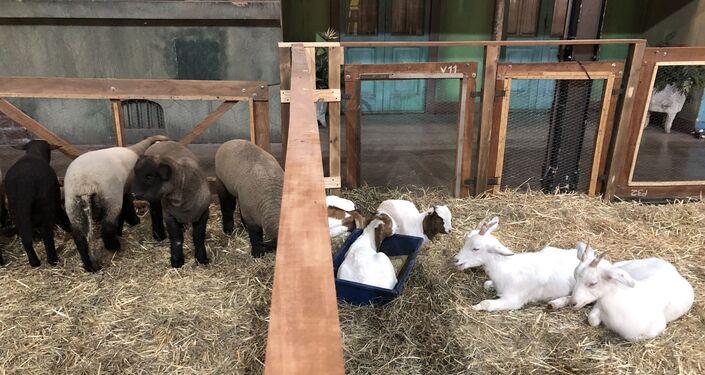 Animales en la Exposición Rural de Buenos Aires de 2019