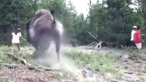 El terrorífico momento en el que un bisonte salvaje ataca a una niña - Sputnik Mundo