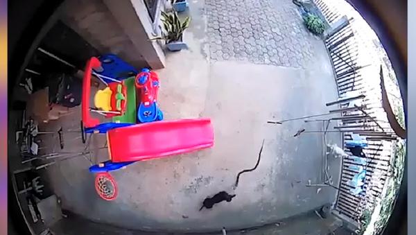Dos perritos arriesgan su vida para salvar a un bebé de una cobra - Sputnik Mundo