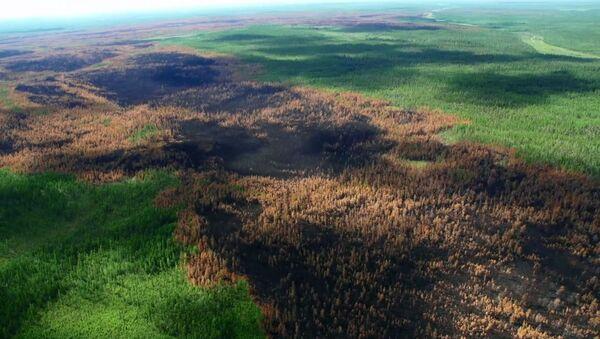 Consecuencias de incendios forestales en Siberia - Sputnik Mundo
