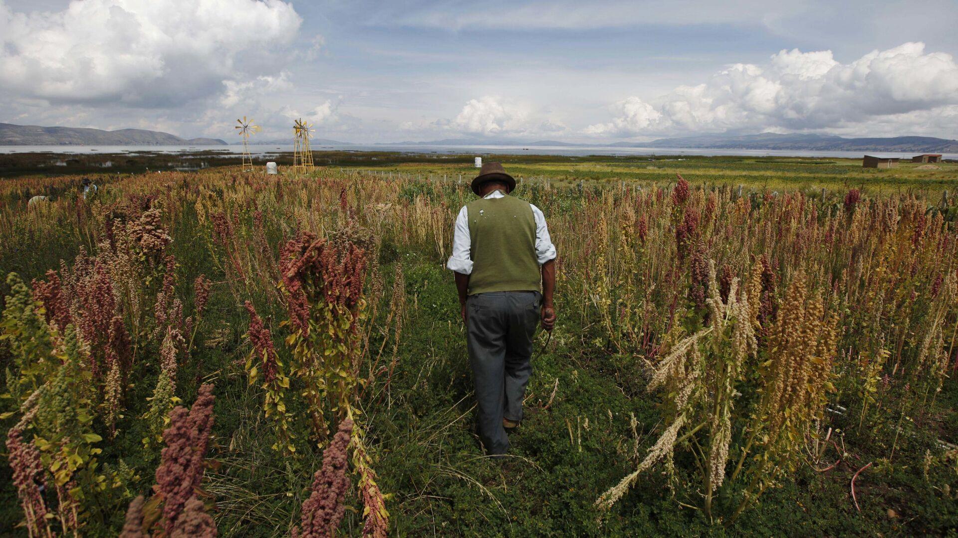 Bolivia cultivos - Sputnik Mundo, 1920, 27.08.2021