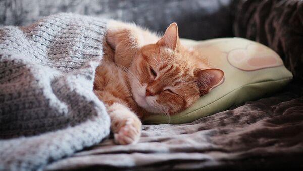 Un gato dormido - Sputnik Mundo