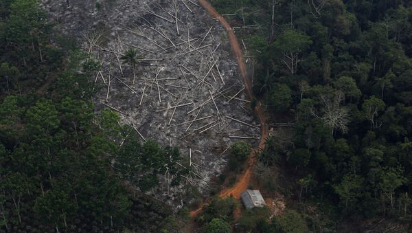 Deforestación en Amazonía - Sputnik Mundo