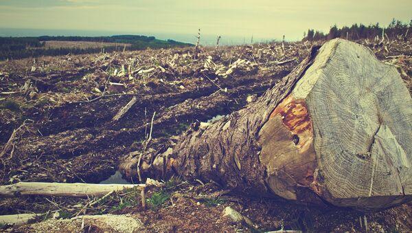 La deforestación (imagen referencial) - Sputnik Mundo