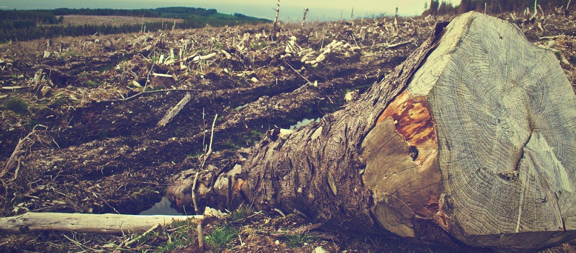 La deforestación (imagen referencial) - Sputnik Mundo, 1920, 20.11.2019