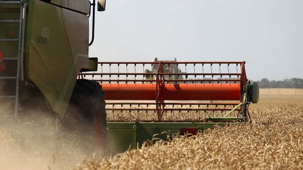 Cosecha de trigo en la región rusa de Krasnodar - Sputnik Mundo