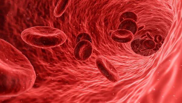 Glóbulos rojos en el torrente sanguíneo (ilustración gráfica) - Sputnik Mundo