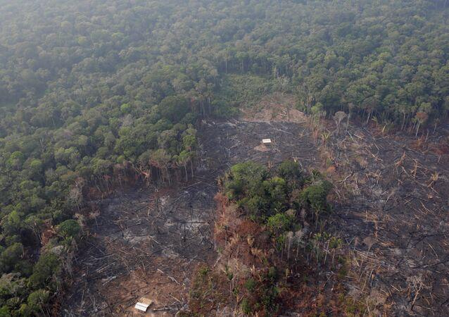 Los bosques de Amazonía