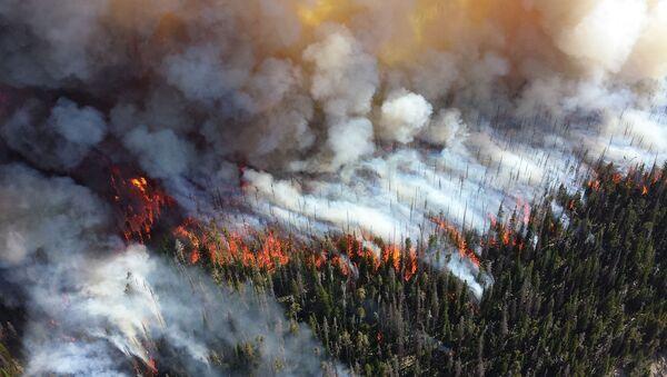 Incendios forestales  - Sputnik Mundo