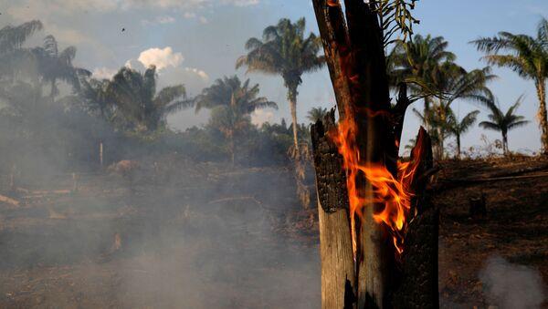 Un tronco se quema en medio de los incendios que afectan a la selva amazónica - Sputnik Mundo