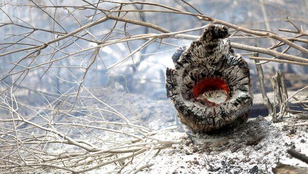 Incendios en la cuenca del Amazonas - Sputnik Mundo