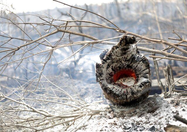 Incendios en la cuenca del Amazonas