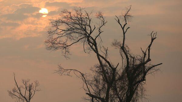 Consecuencias de los incendios forestales en Amazonía  - Sputnik Mundo