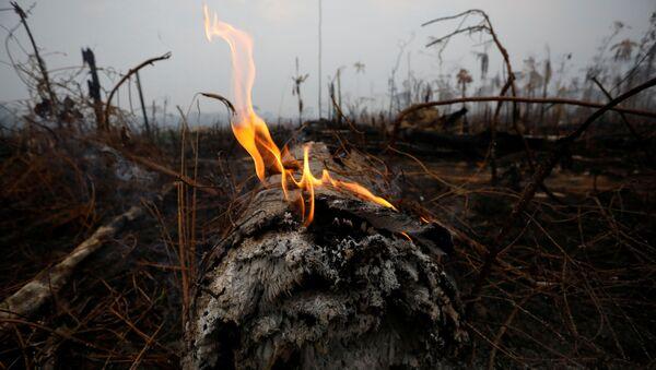 Incendios en la Amazonía - Sputnik Mundo
