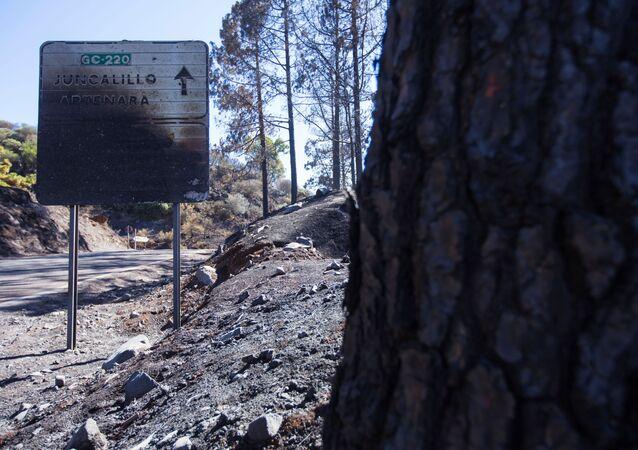 Las consecuencias de los incendios en España