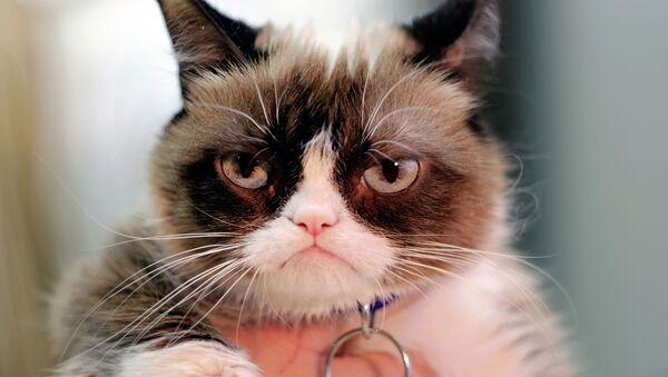 Grumpy cat, la gata gruñona - Sputnik Mundo