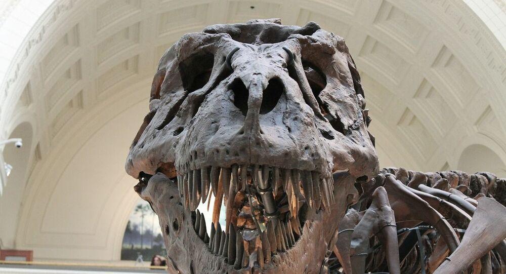 El cráneo del tyrannosaurus rex