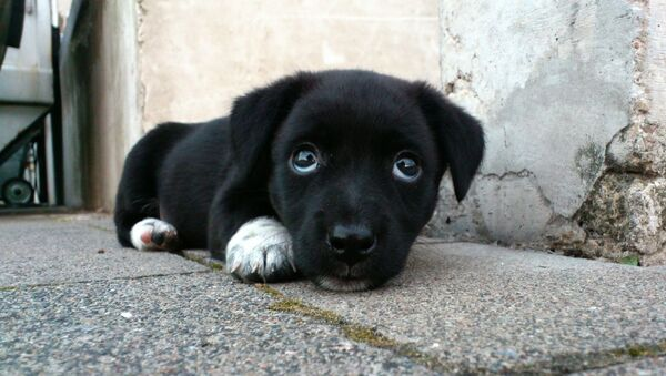 Un perrito callejero, imagen referencial - Sputnik Mundo