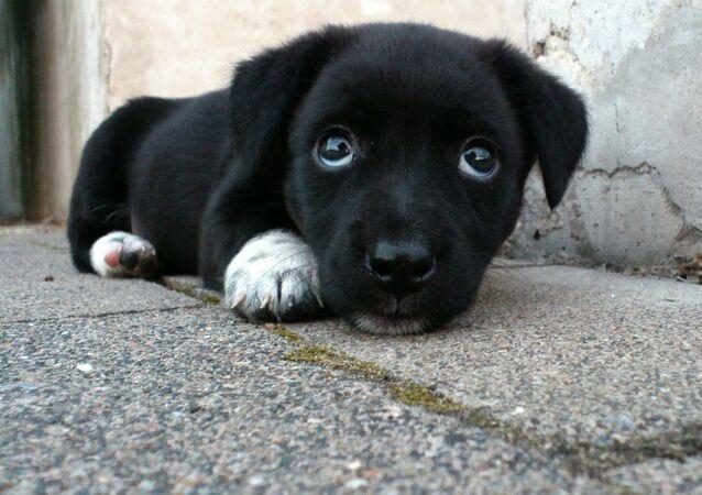 Un perrito callejero, imagen referencial