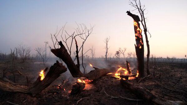 Los incendios forestales en Bolivia - Sputnik Mundo